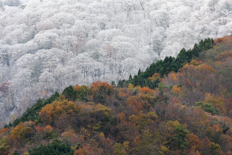 O outono encontra o inverno imagem de stock