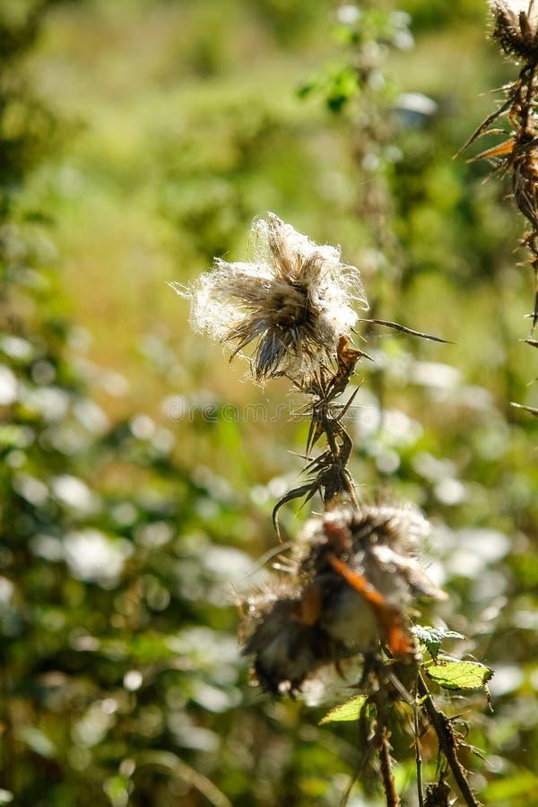 O outono floresce no parque natural aberto da floresta imagem de stock royalty free