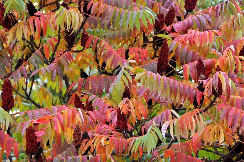 O outono folheia fundo fotografia de stock royalty free