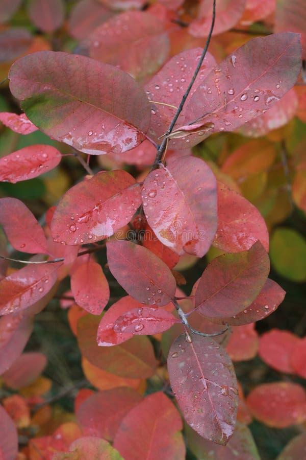O outono majestoso e bonito está aqui imagem de stock royalty free