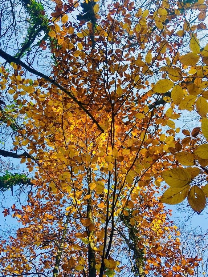 O outono sob o céu foto de stock royalty free