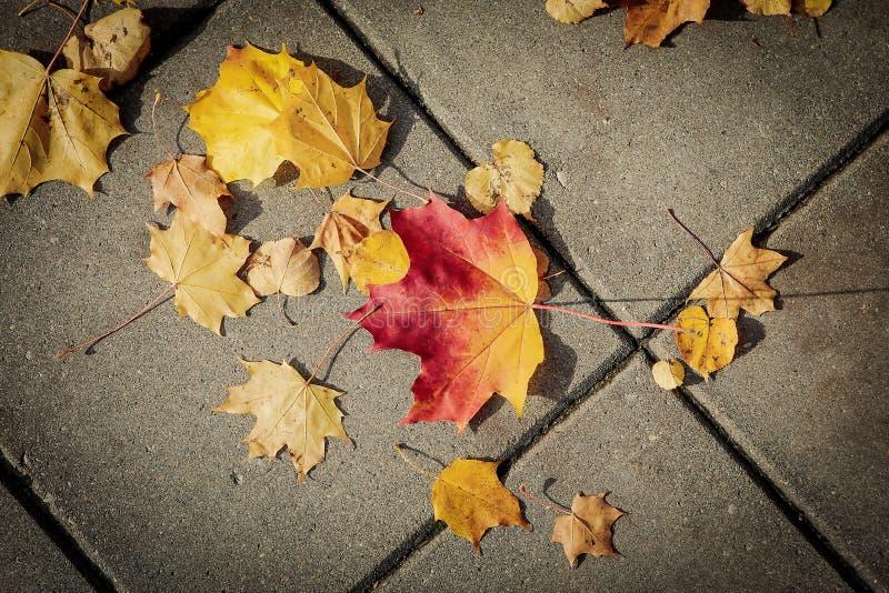 O outono vem à cidade fotos de stock royalty free