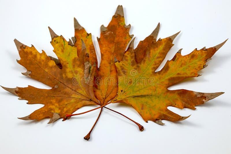 O outono vem e sae foto de stock royalty free