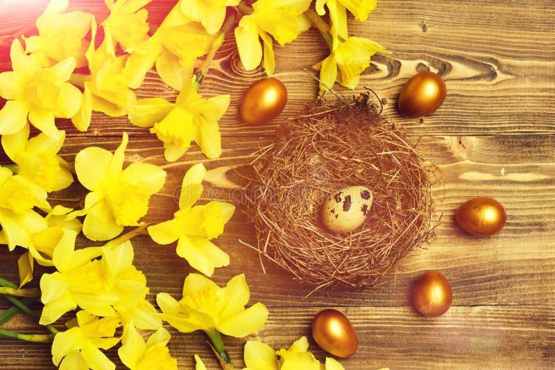O ovo de codorniz dourado tradicional de easter no ninho, salta narciso amarelo imagens de stock royalty free