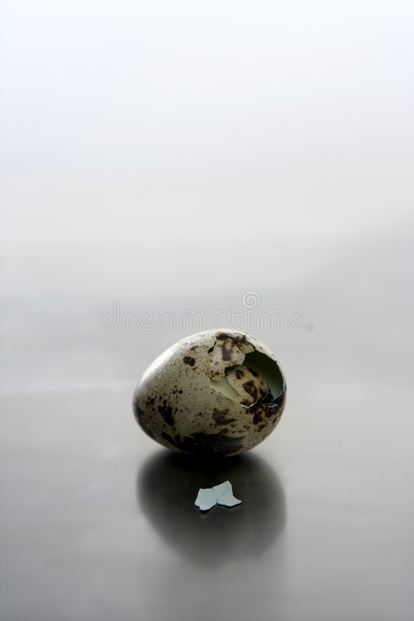O ovo de codorniz quebrado, pássaro de bebê novo carregado fotos de stock