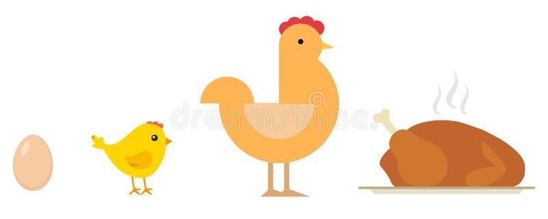 O ovo, pintainho, galinha, cozeu a galinha na bandeja Ciclo de vida da galinha ilustração do vetor