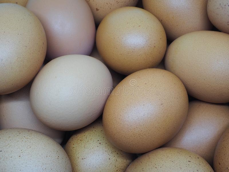 O ovo próximo vê até o detalhe fotografia de stock