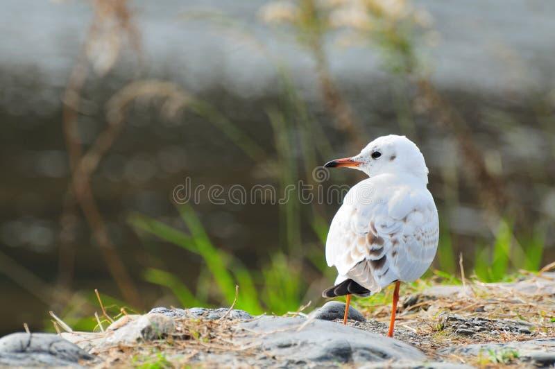 O pássaro branco no outono imagens de stock