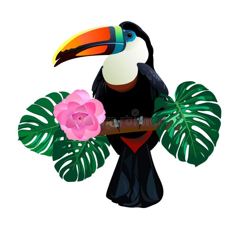 O pássaro brilhante do tucano que senta-se no ramo em torno do monstera da palma sae e floresce no fundo branco ilustração stock