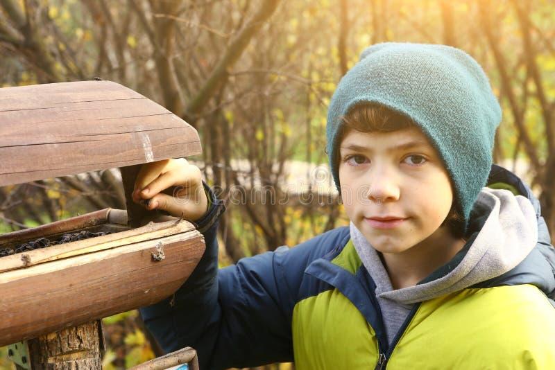 O pássaro de alimentação do menino do Preteen pôs a grão no comedoiro fotos de stock royalty free