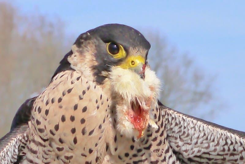 O pássaro de reza fotos de stock