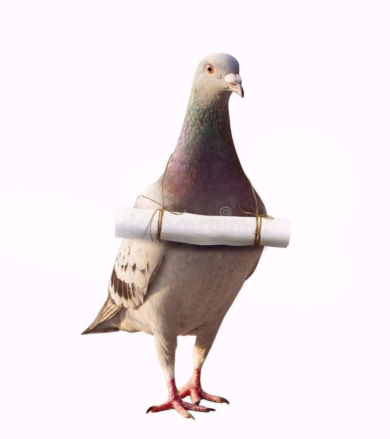O pássaro e o papoer do pombo rotulam a mensagem para enviar no pescoço para o sumário foto de stock