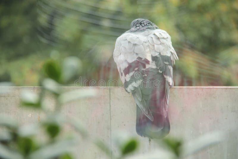 O pássaro está sentando para fora a janela fotografia de stock royalty free