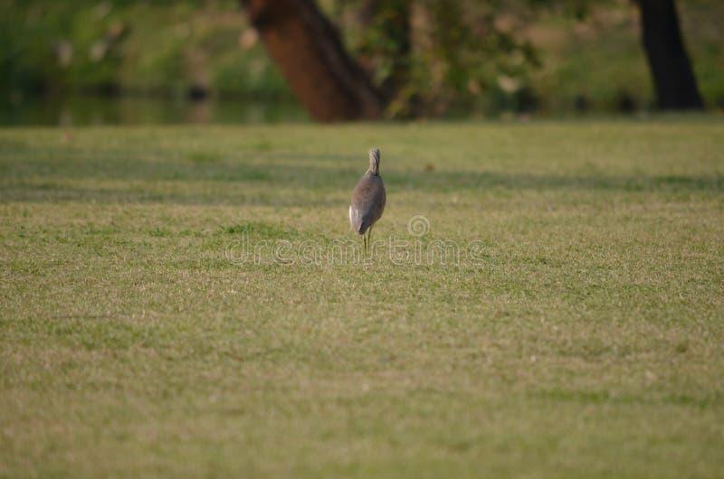 O pássaro marrom foto de stock