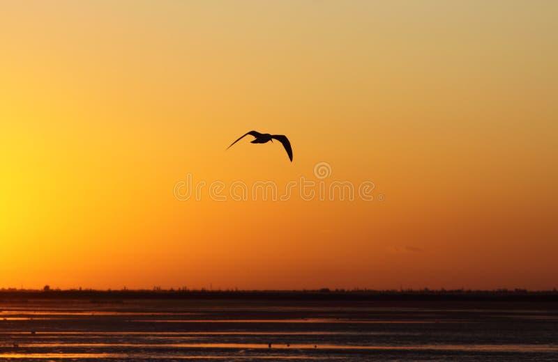 O pássaro pairando imagem de stock