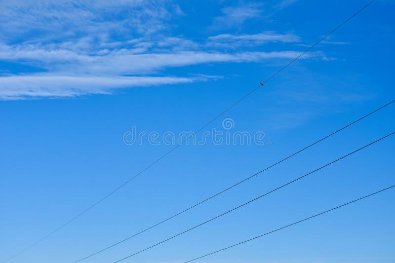 O pássaro senta-se nos fios da linha elétrica contra o céu azul foto de stock