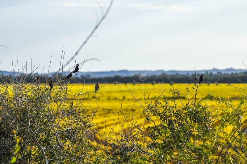 O pássaro solitário no paisage fotografia de stock royalty free