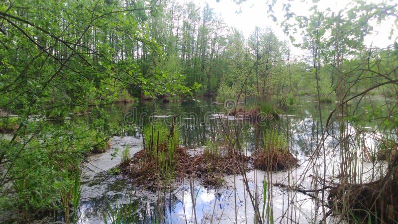 O pântano imagem de stock