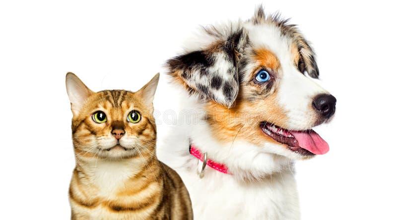 O pãozinho e o gatinho estão olhando perto fotografia de stock royalty free