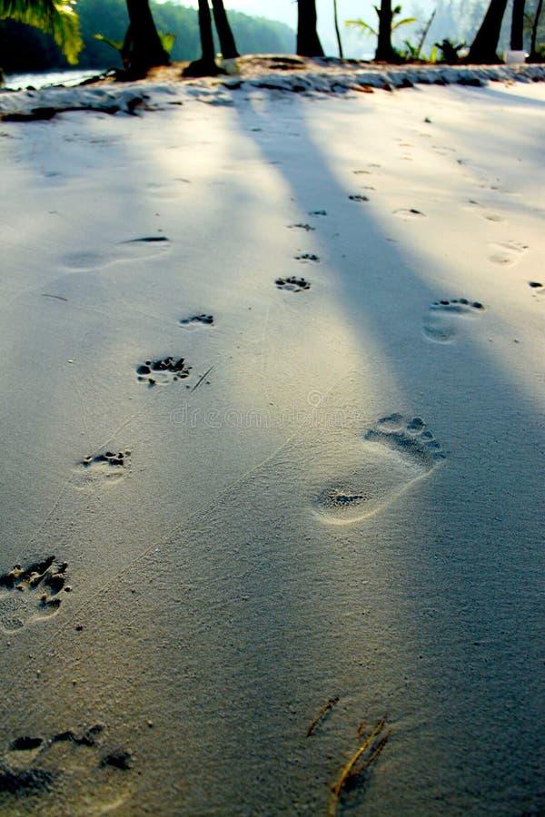 Download Cópia do pé imagem de stock. Imagem de areia, sunlight - 29841735
