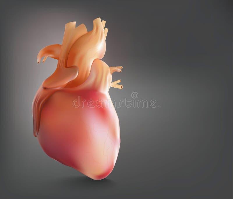 O pó humano da mostra do coração é uma imagem 3D ilustração stock