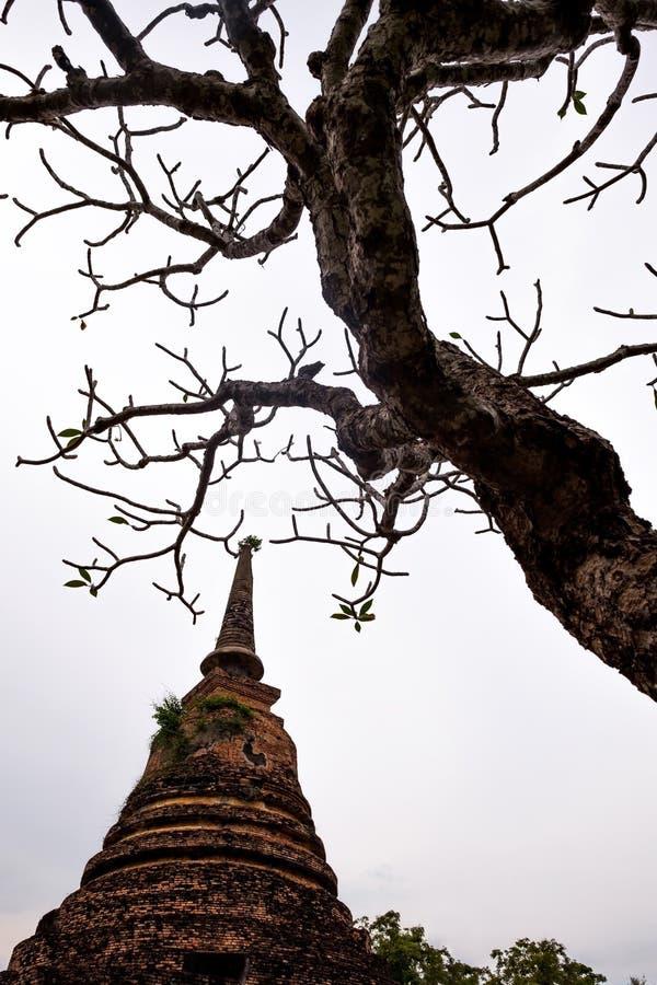 O pagode velho e morreu árvore fotos de stock royalty free