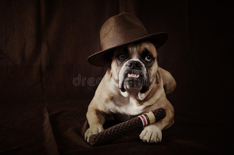 O pai do cão fotografia de stock