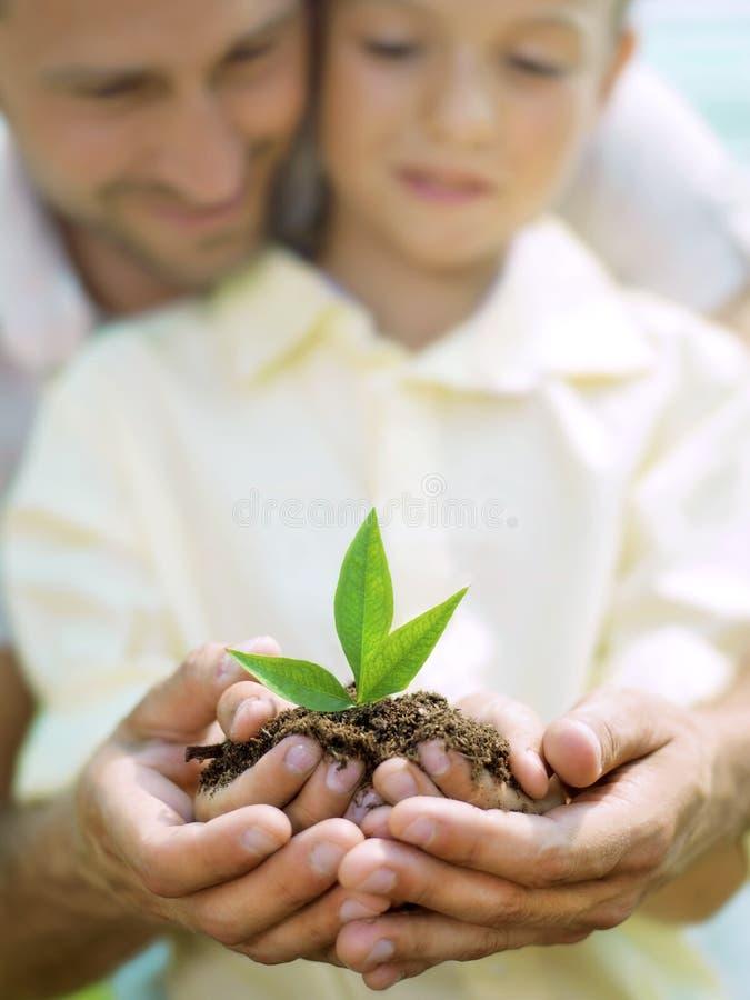 O pai educa o filho para importar-se uma planta imagens de stock