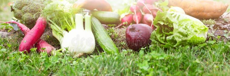 O panorama com lote de vários vegetais orgânicos está encontrando-se em um fl fotografia de stock royalty free