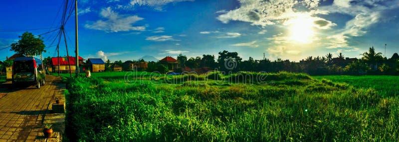 O panorama do arroz coloca em Ubud, Bali imagem de stock