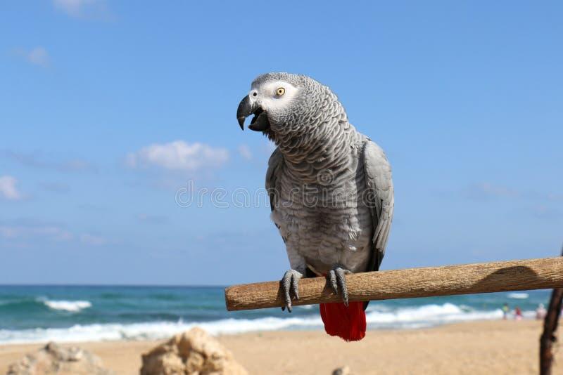 O papagaio gosta de ser fotografado imagens de stock
