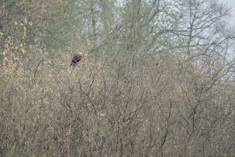 O papagaio vermelho senta-se em uma árvore que procura o alimento imagens de stock royalty free