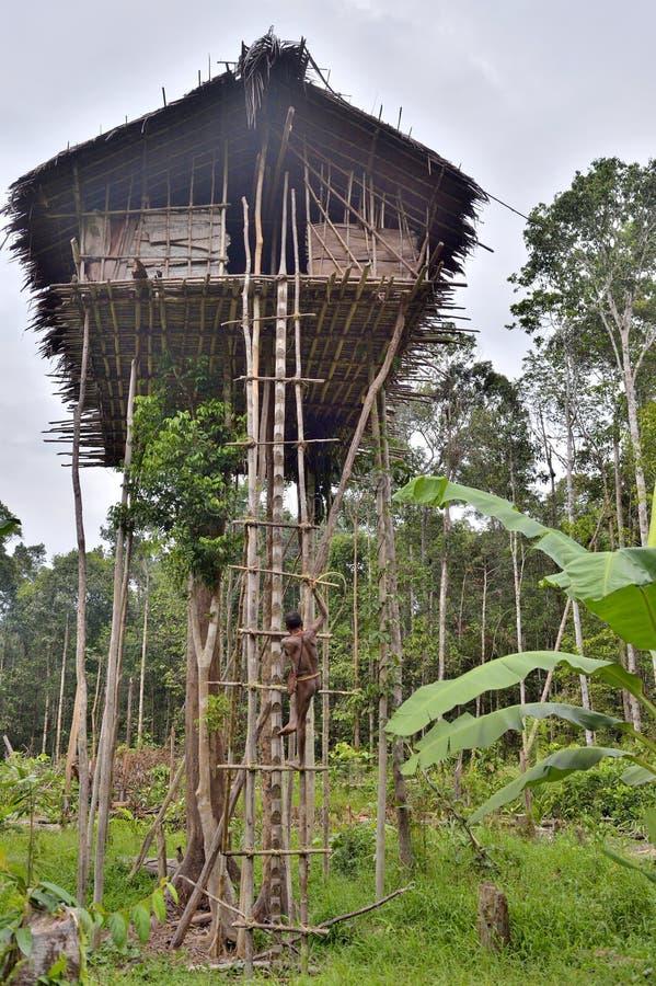 Download O Papuan Do Tribo De Korowai Escala Na Casa Em Uma árvore Foto de Stock Editorial - Imagem de cannibalism, étnico: 80102788