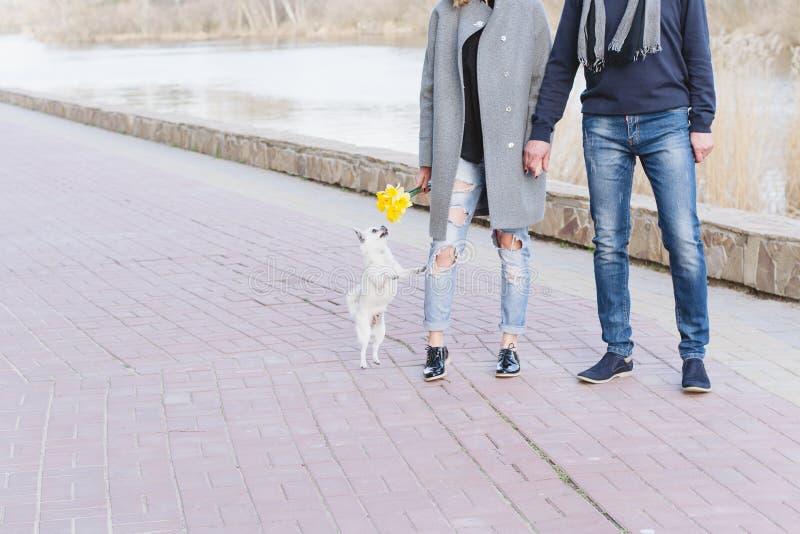 O par à moda no amor está andando com o cão ao longo do passeio fotografia de stock