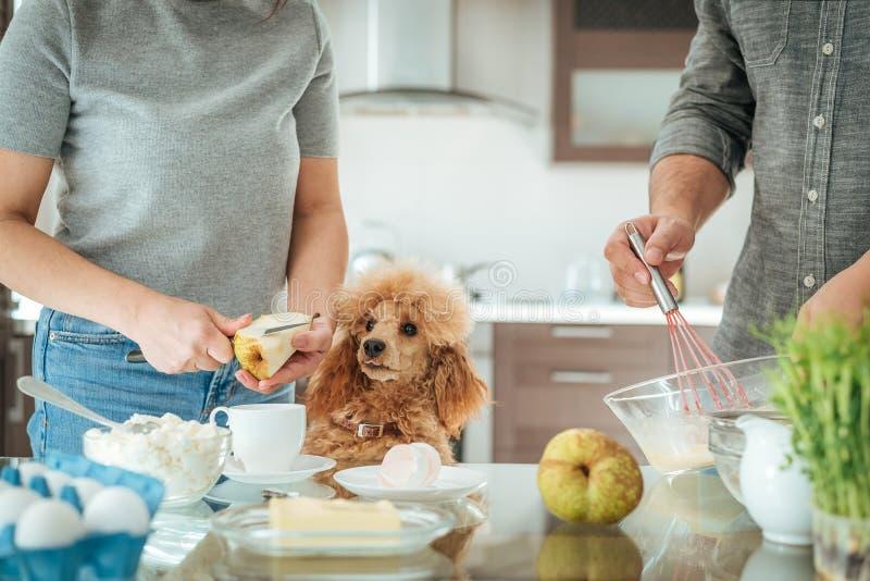 O par com cão está fazendo o café da manhã foto de stock royalty free