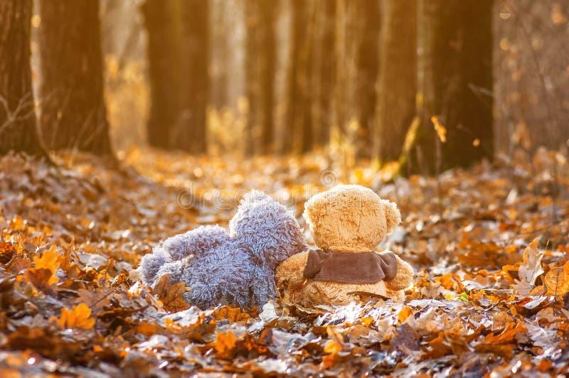 o par de ursos de peluche senta-se para trás nas folhas de outono caídas e na vista na luz solar imagens de stock royalty free