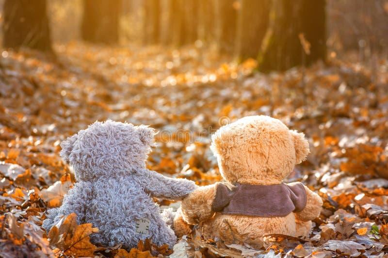 o par de ursos de peluche senta-se para trás nas folhas de outono caídas e na vista na luz solar fotos de stock