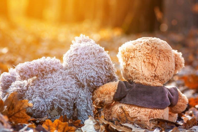 o par de ursos de peluche senta-se para trás nas folhas de outono caídas e na vista na luz solar imagens de stock