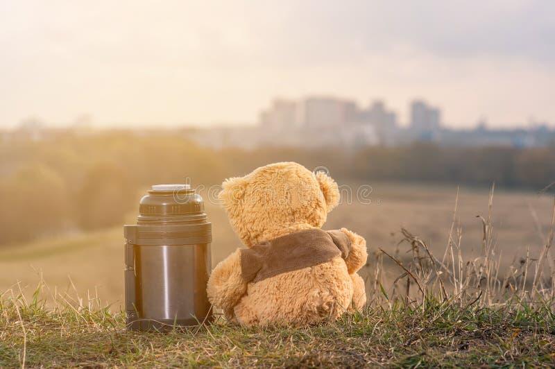 o par de ursos de peluche senta-se para trás nas folhas de outono caídas sobre um monte e em olhar a cidade na luz solar foto de stock royalty free