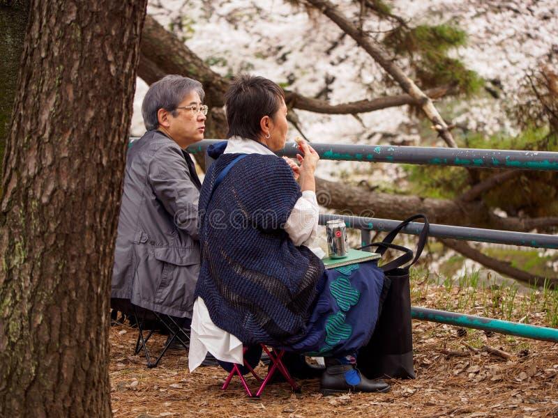 O par idoso vê flores de Sakura, Nagoya, Japão fotos de stock royalty free