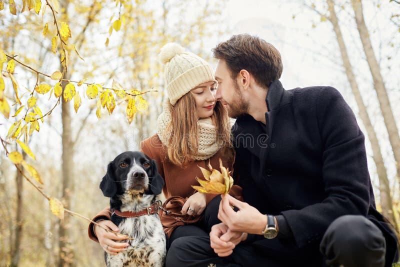 O par no amor em um dia morno do outono anda no parque com um spaniel alegre do cão Amor e ternura entre um homem e uma mulher fotografia de stock
