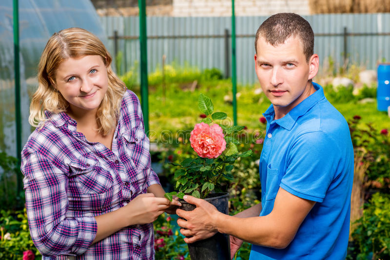 O par novo seleciona plântulas das flores fotos de stock