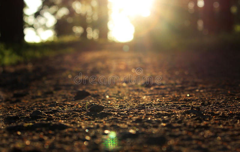 O parque de Gatchina da noite é iluminado pelo sol do verão O trajeto com cascalho no parque de Gatchina de um baixo ângulo é ilu foto de stock royalty free