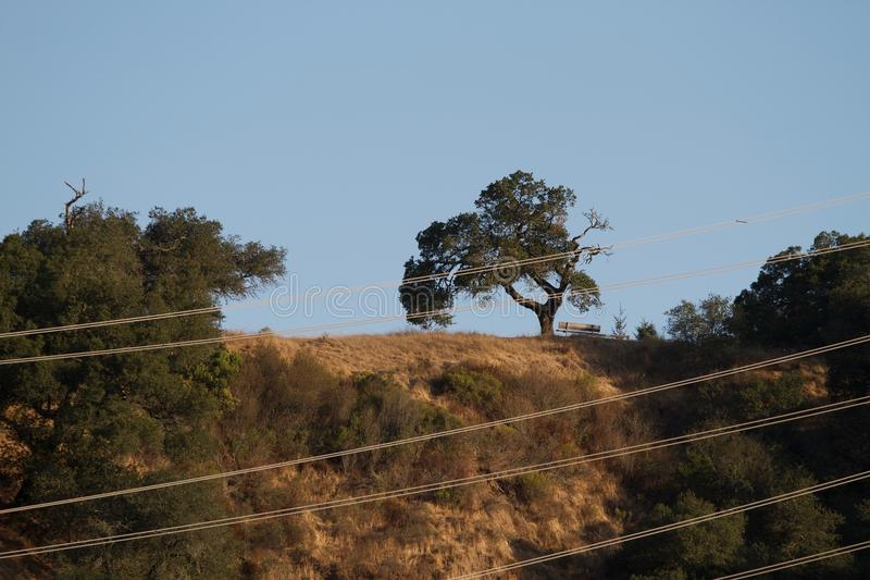 O parque de Shiloh Ranch Regional The inclui as florestas do carvalho, florestas dos evergreens misturados, cumes com opiniões ar imagem de stock