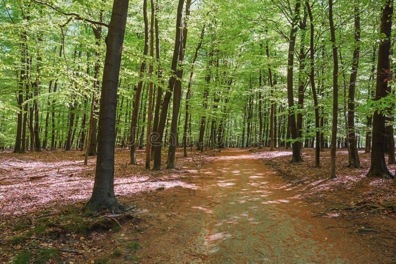 O parque do gabinete situado em Apeldoorn foto de stock