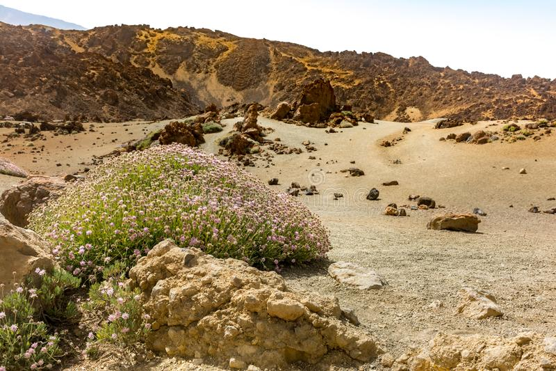O parque nacional de Teide ocupa a área a mais alta da ilha de Tenerife nas Ilhas Canárias e na Espanha imagens de stock