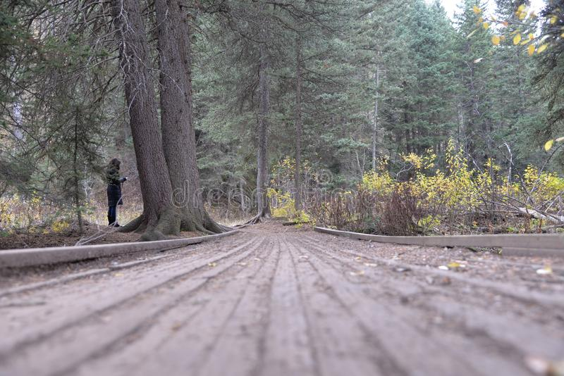 O parque nacional grande de Teton é uma área vasta das imagens fotográficas bonitas que esperam para ser tomado fotografia de stock royalty free