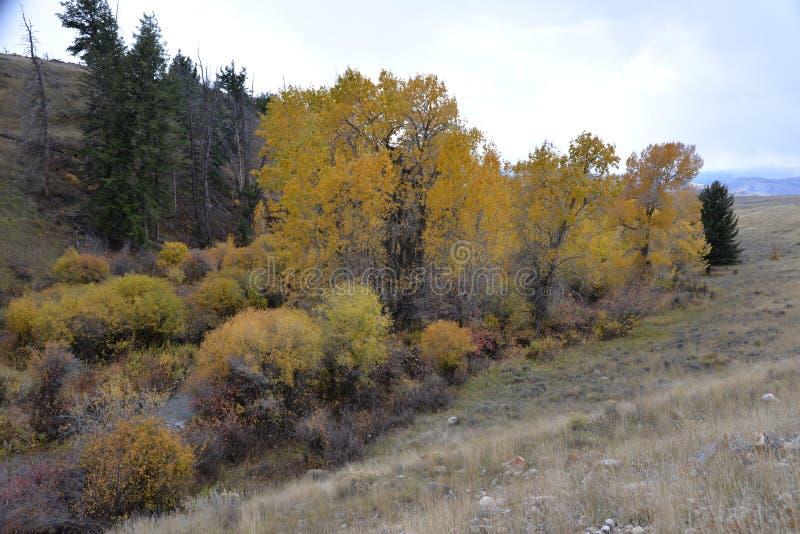 O parque nacional grande de Teton tem a cor todo o ano ao redor, embora porque o inverno aproxima o branco da cor domina imagem de stock royalty free