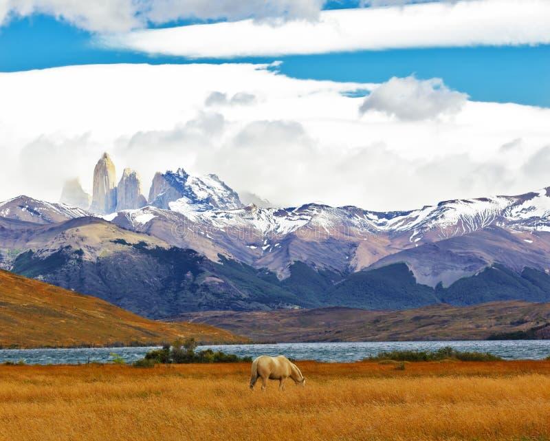 O parque nacional Torres del Paine fotografia de stock royalty free