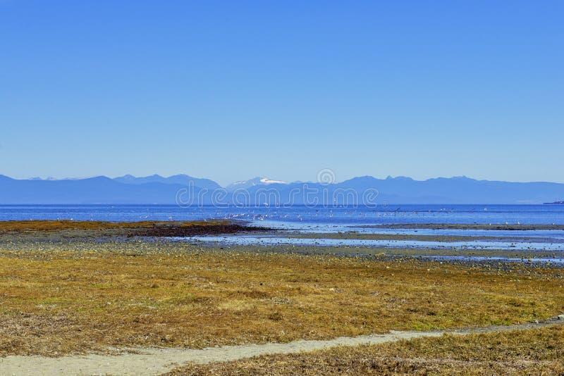 O parque provincial da praia de Rathtrevor durante a maré baixa em Vancôver é imagens de stock royalty free